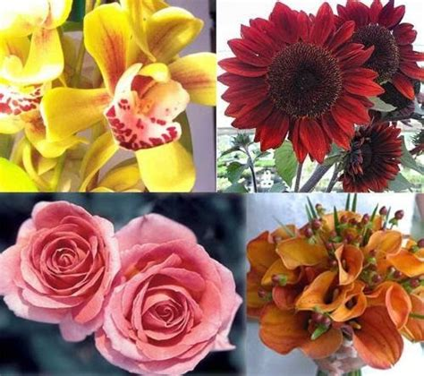 types of decorations different types of flowers with pictures and names