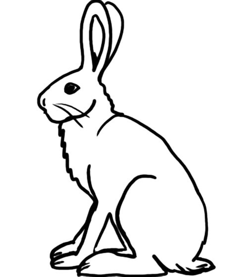 Free Coloring Pages Arctic Hare Coloring Page