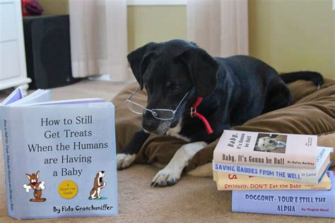 baby announcements with dogs 10 baby announcements with dogs that will make you squee rover