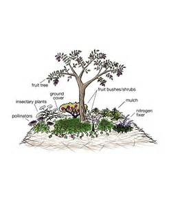 permaculture guilds fruit trees permguildclr jpg 1 936 215 2 352 pixels garden vegetables