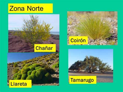 Imagenes De Flores De La Zona Norte | unidad 1 las plantas 3 186 b 225 sico a b ppt video online