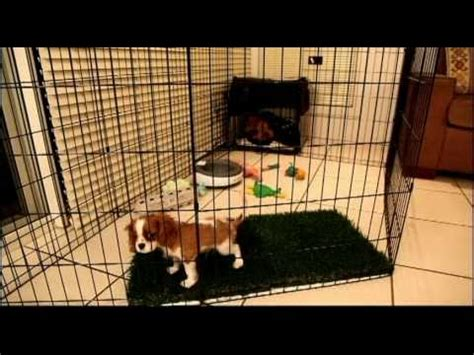 find puppies in your area term confinement area for puppies by
