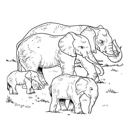imagenes niños dibujos dibujos de elefantes bebes para colorear colorear website