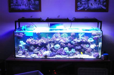 Led Aquarium Lighting by 120w Aquarium Led Lighting For Fish Coral Tank In