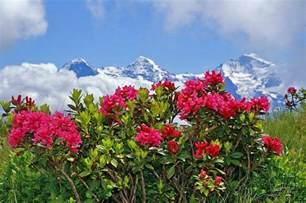 Flowers To Switzerland - bilder beatenberg berner oberland schweiz niederhorn