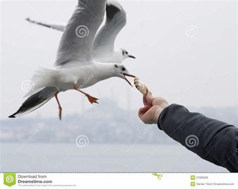 feeding seagulls stock image image of motion blur bird