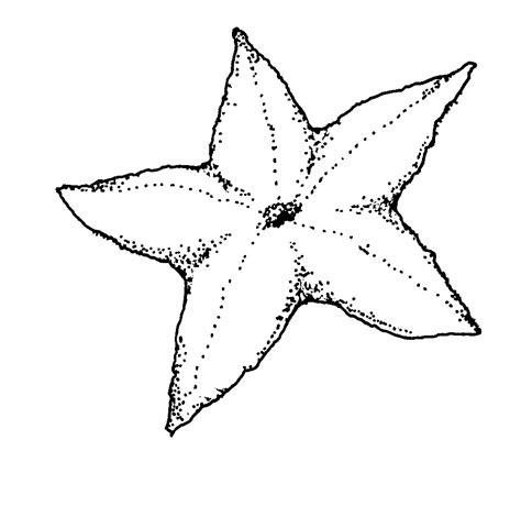free printable starfish coloring pages for kids