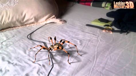 spider in bed big spider in the bed youtube