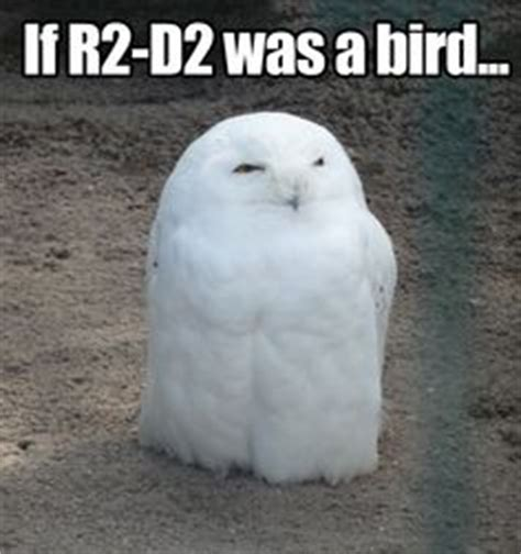 White Owl Meme - 1000 images about funny owls on pinterest owl funny
