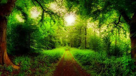 imagenes hermosas de amor en hd fondos hd camino verde fondo hd