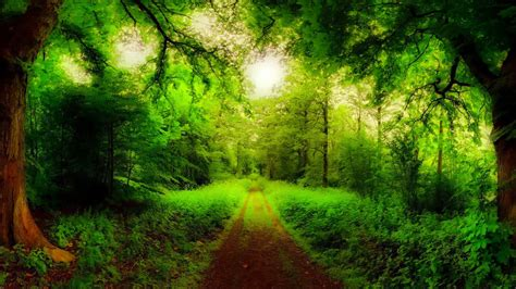 imagenes de paisajes verdes para pantalla fondos hd camino verde fondo hd