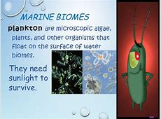 Marine Biomes Rocky Intertidal Zones