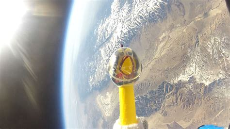 chicken rubber sts rubber chicken camilla flies to edge of space photos