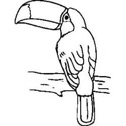 toucan coloring page toucan template search 1st grade