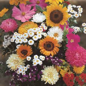 old fashioned garden mix nk wildflower seeds various