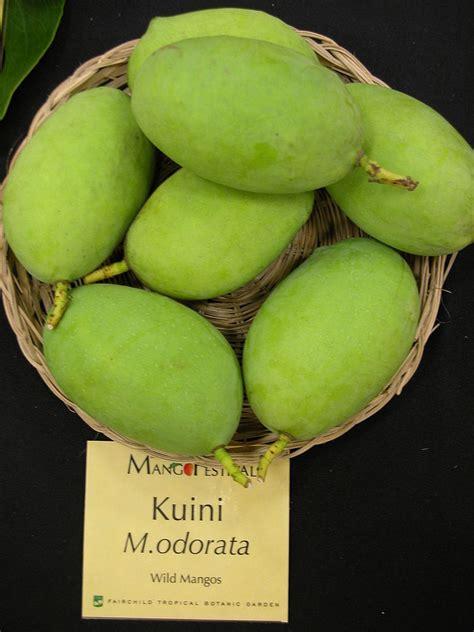 Mango Kuini 醫聲論壇 檢視主題 杧果屬 mangifera 漆樹科 anacardiaceae