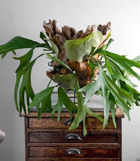 great house plants  decorating small apartments  homes