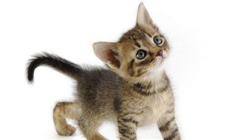 consejos para educar a tu gato y tenerle siempre contento