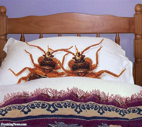 i think i have bed bugs i think i have bedbugs qbn