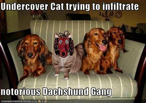 Weiner Dog Meme - dachshund memes liz rio