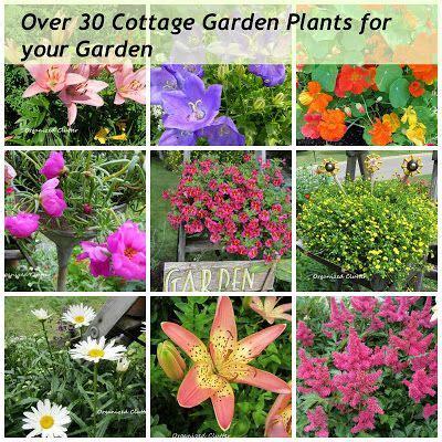 cottage garden bulbs 75 best flower bed ideas images on flower