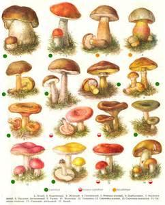 грибы бабки фото и описание