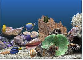 Marine Aquarium Deluxe Screensaver   Avanquest