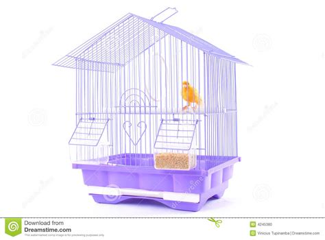 canary bird cage stock photos canary in the cage stock photo image 4245380