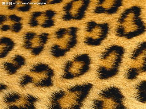 tiger print full hd wallpaper and background image 豹纹底图摄影图 野生动物 生物世界 摄影图库 昵图网nipic com
