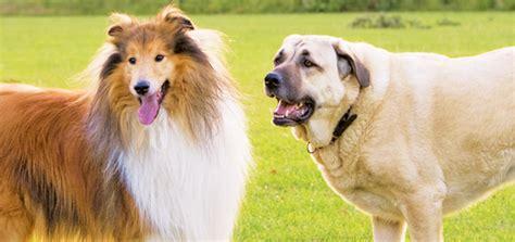 how to introduce dogs how to introduce dogs modern magazine