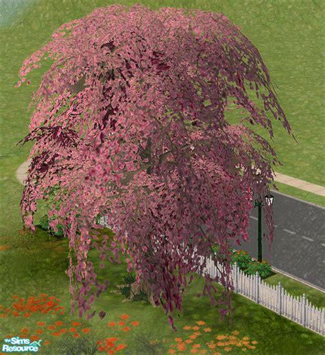sims 4 cherry tree sissywoods cherry blossom tree
