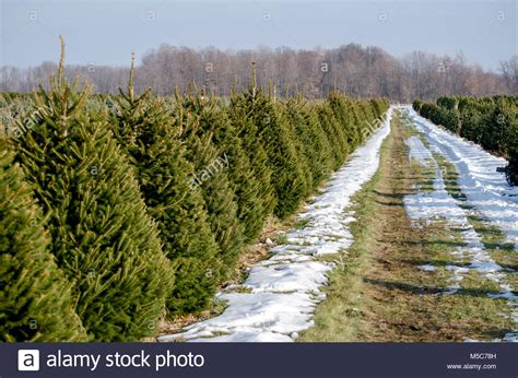 awesome picture of christmas tree farms in southeast