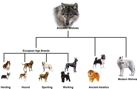 origin of dogs history of the history of the wisdom panel