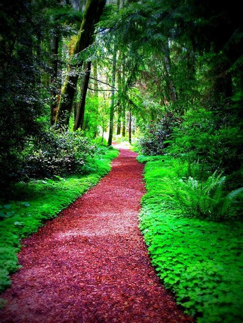 25 best beautiful pathways images on pinterest pathways beautiful places and forests