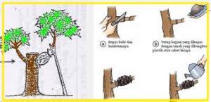 Jual Bibit Anggrek Kompot cangkok tanaman bunga hias