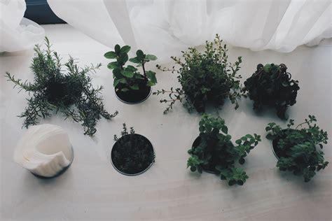 fazer mudas de plantas aprenda como fazer