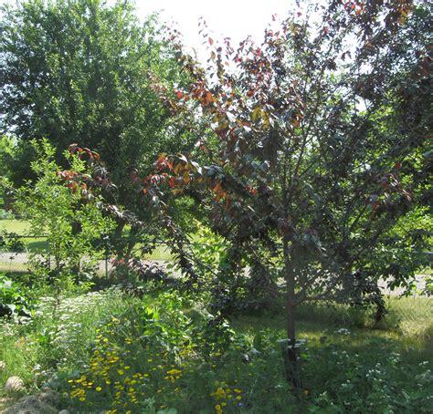 Plumb Tree by Plum Tree Vegarden