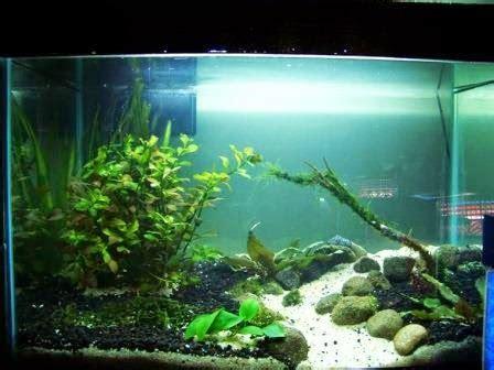 aquarium cantik  cocok  hiasan  meja kerja