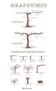 Trellis Parts Illustrated Grape Vine Training Methods Wine Folly