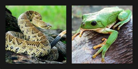 imagenes de animales de mexico conferencia animales de m 233 xico anfibios y reptiles
