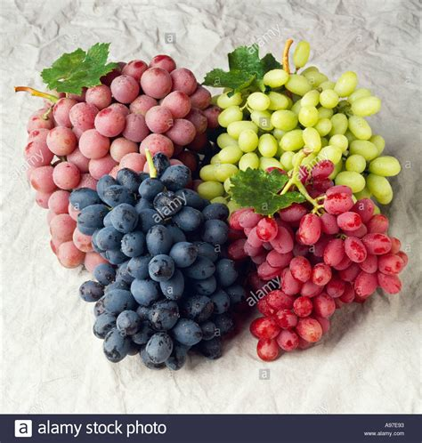 Table Grapes by Agriculture Four Table Grape Varieties Autumn Royal Black Grapes Stock Photo Royalty Free