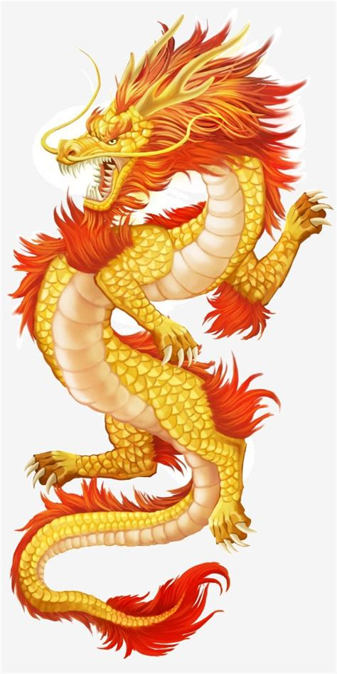 chinese style golden dragon decoration illustration