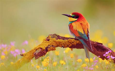 colorful birds wallpaper hd beautiful latest colorful birds hd wallpaper