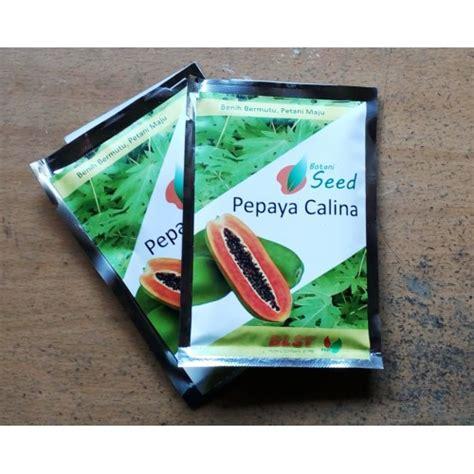 Bibit Pepaya Calina jual benih pepaya calina ipb9 isi 150 biji