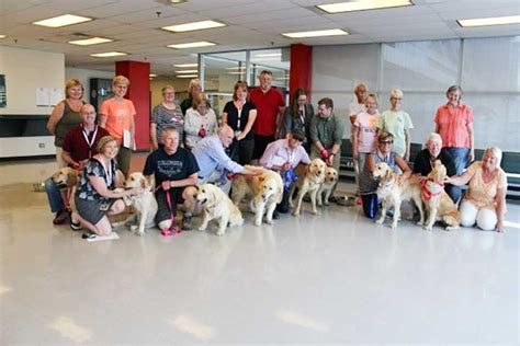 rescue groups golden retrievers get second chance in loving manitoulin homes