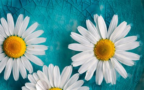 daisy wallpaper pinterest illustration of abstract turquoise floral background