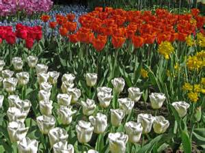 What To Plant In A Summer Garden - vandusen botanical gardens in vancouver canada