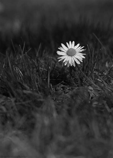imagenes tumblr black and white black and white flower gif find share on giphy