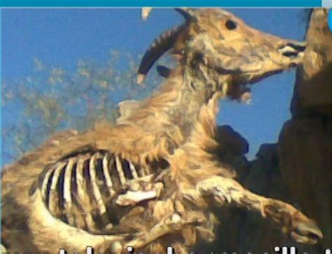 que comen las hadas que comen los animales zool 243 gico de sonora animales que siguen vivos se comen a