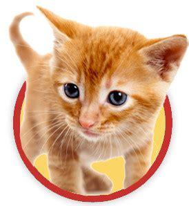 cibi pericolosi per e gatto da evitare a natale